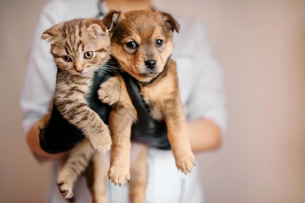 Veterinario in guanti neri con un cane e un gatto in mano Foto Premium