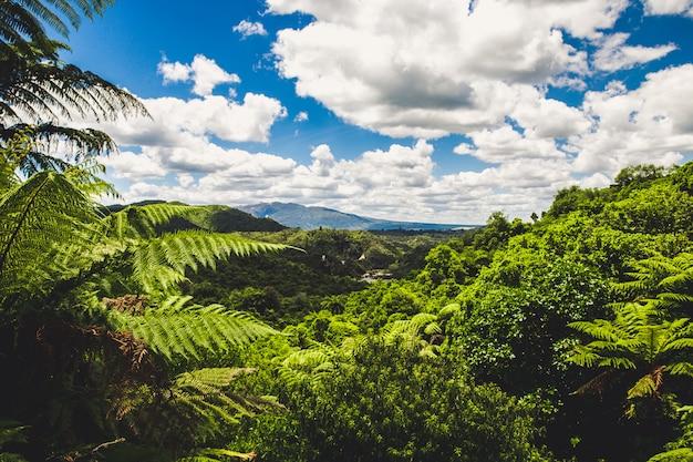 Vista della foresta pluviale a waimangu, rotorua, nuova zelanda Foto Premium
