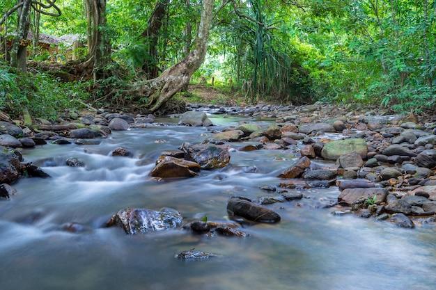Vista del piccolo fiume tropicale con acqua liscia che scorre sulle rocce con alberi verdi in ba Foto Premium
