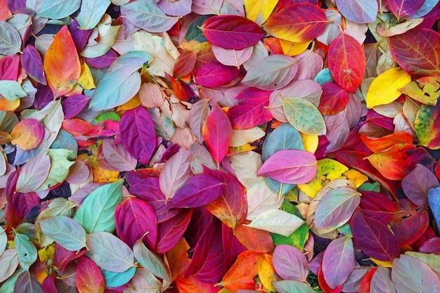Camminando in autunno tra le foglie colorate Foto Premium