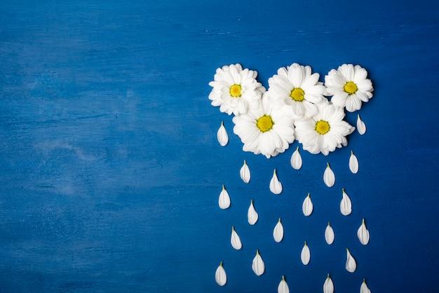 Crisantemi bianchi a forma di nuvole e petali di gocce di pioggia. sfondo primavera o estate con copia spazio per il testo Foto Premium