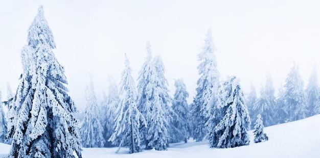 Alberi di pelliccia bianca invernale ricoperti di neve nella foresta su spazio diurno fumo bianco Foto Premium