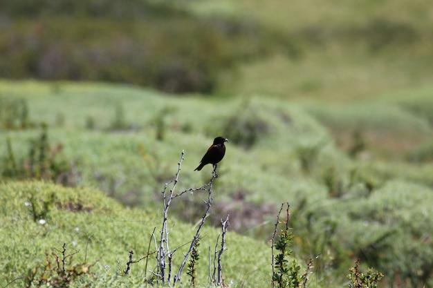 Uccello selvatico in piedi su un piccolo bastone su un campo di cespugli Foto Premium
