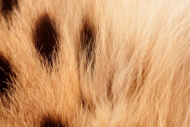 Gatto selvatico, trama di pelliccia serval. primo piano soft focus naturale Foto Premium