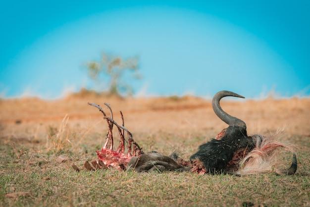 Migrazione degli gnu tra il parco nazionale del serengeti e il maasai mara Foto Premium