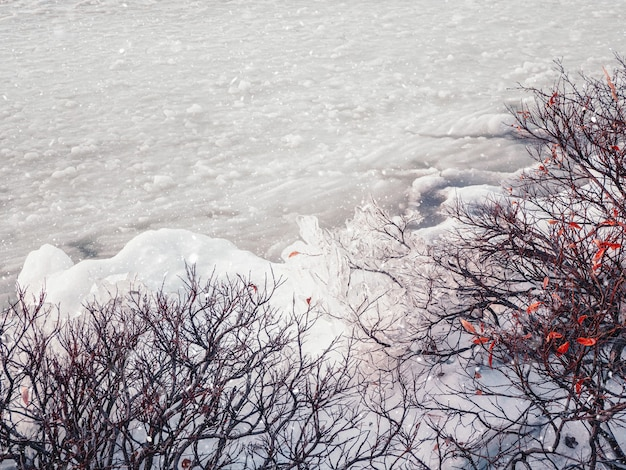 Vista invernale di ghiaccio sui cespugli vicino a un lago coperto di neve Foto Premium