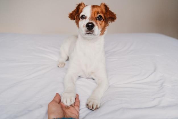 Zampa del cane della tenuta della mano della donna che si trova sul letto Foto Premium