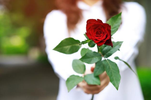 Donna che tiene una rosa rossa nelle mani Foto Premium