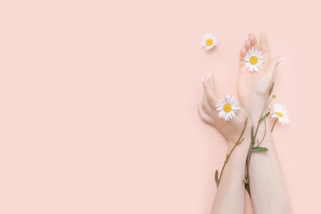 Le mani delle donne con il concetto di cosmetici naturali di fiori di camomilla. copia spazio Foto Premium