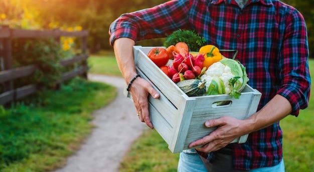 La scatola di legno con le verdure fresche dell'azienda agricola si chiude su in mani degli uomini all'aperto. Foto Premium