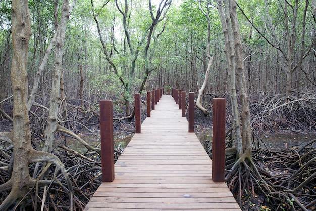 Passerella in legno nella foresta di mangrovie. Foto Premium