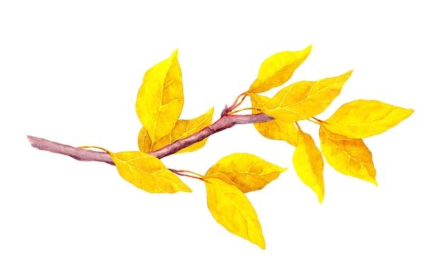 Foglie astratte gialle sulla filiale di autunno. Foto Premium