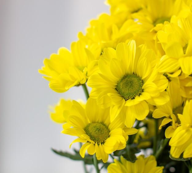Crisantemi gialli in un bouquet su uno sfondo diverso. foto di alta qualità Foto Premium