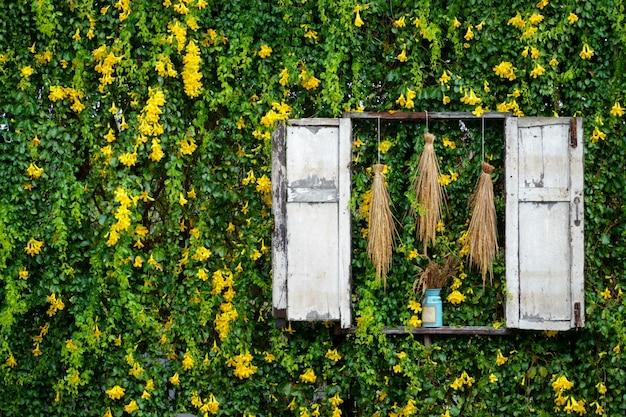 Parete rampicante della pianta rampicante del fiore giallo dell'edera e della foglia verde strutturata Foto Premium