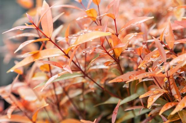 Struttura delle foglie gialle con gocce d'acqua piovana foglie di autunno Foto Premium