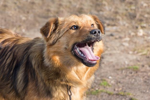 Un giovane cane marrone con la bocca aperta in tempo soleggiato Foto Premium