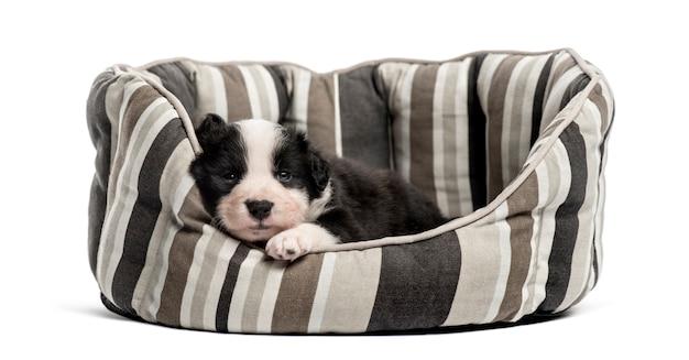 Cucciolo dell'incrocio giovane che dorme in una culla isolata su bianco Foto Premium