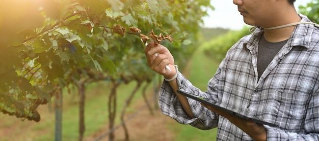 Un giovane agricoltore sta usando un tablet mentre si trova nel frutteto. Foto Premium