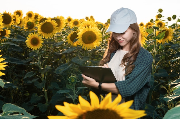 Agronomo della giovane donna che ispeziona i girasoli nel campo Foto Premium
