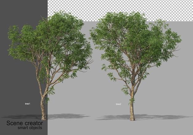 Rendering 3d di bellissimi alberi in vari angoli isolati Psd Premium