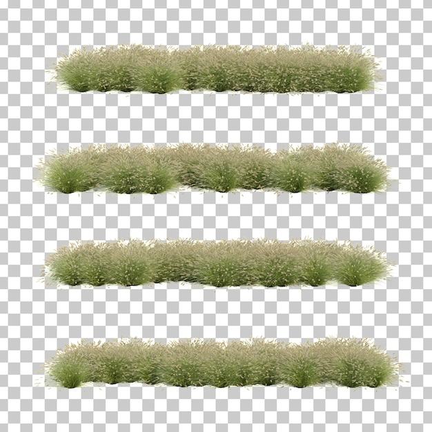 Rappresentazione 3d dell'erba del feathertop Psd Premium