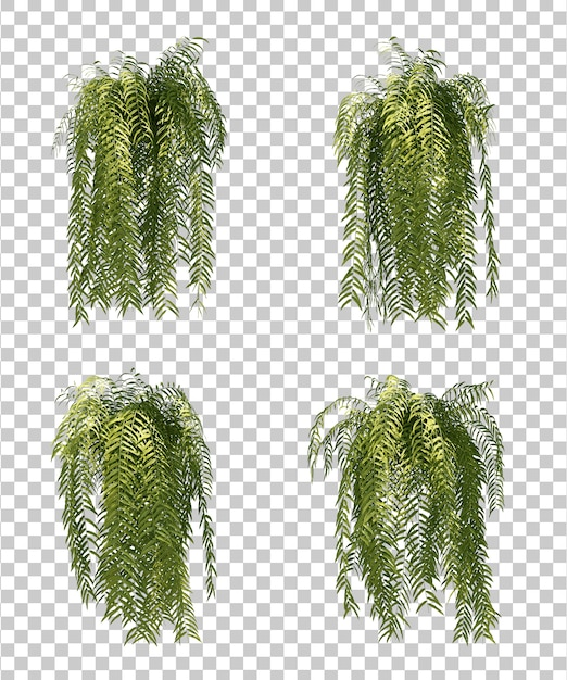 Rappresentazione 3d dell'albero di felce Psd Premium
