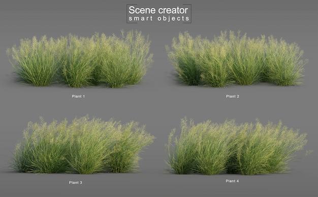 Rendering 3d di erba di riso indiano Psd Premium