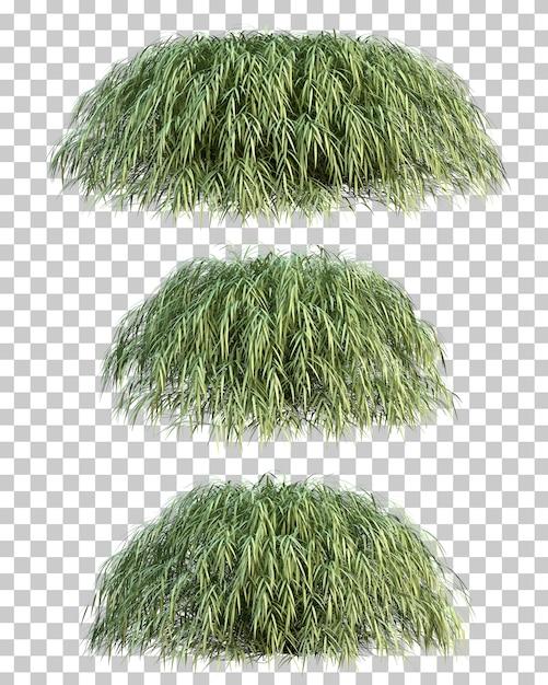 Rappresentazione 3d dell'erba giapponese della foresta Psd Premium