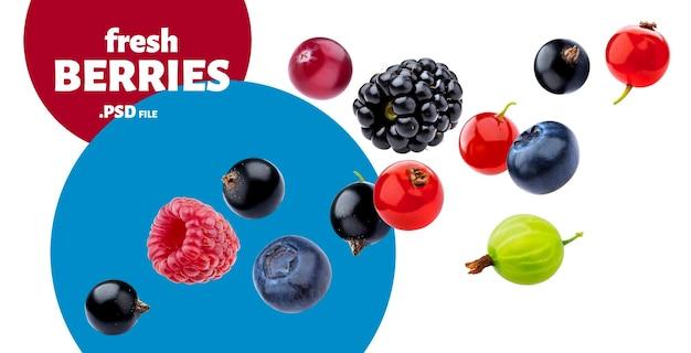 Raccolta di frutti di bosco selvatici che cadono isolato Psd Premium