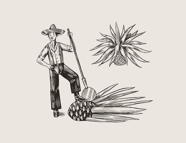 Pianta di agave per cucinare la tequila. frutta e contadino e raccolto. poster o banner retrò. schizzo vintage disegnato a mano inciso. stile xilografia. illustrazione. Vettore Premium