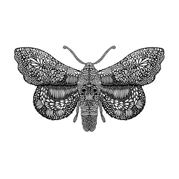 Illustrazione stupefacente della farfalla della mosca Vettore Premium