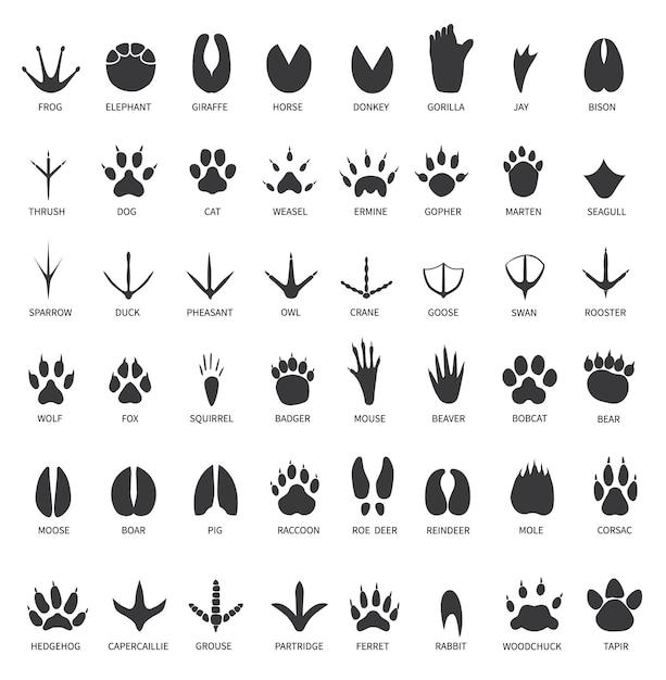 Impronte di animali Vettore Premium
