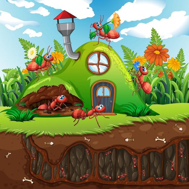 Famiglia di formiche a casa Vettore Premium
