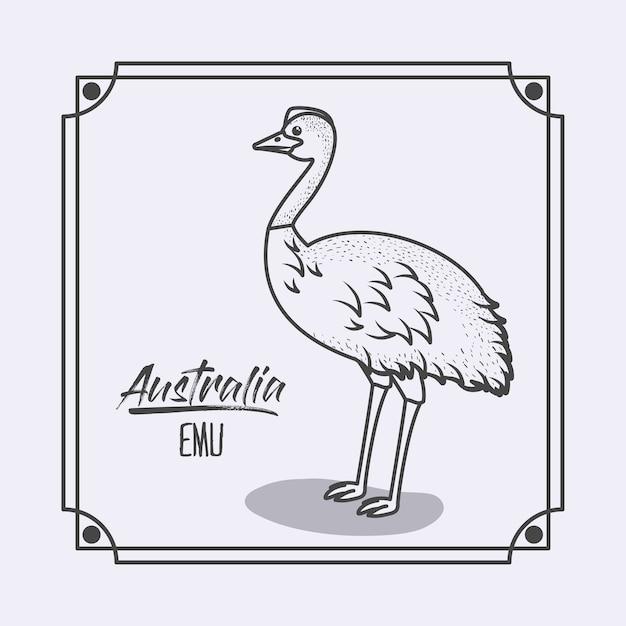 Emù australia a cornice e silhouette monocromatica Vettore Premium