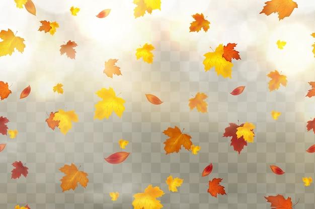 Autunno che cade foglie rosse, gialle, arancioni, marroni su sfondo trasparente. Vettore Premium