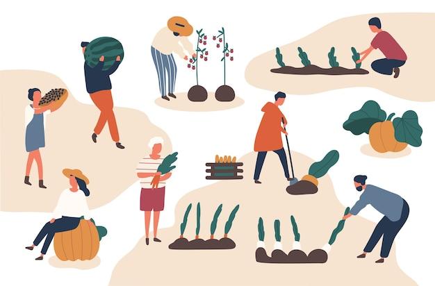Insieme di illustrazioni vettoriali piatte di raccolta autunnale. agricoltori che lavorano nel campo. raccolta di frutta e verdura nella stagione autunnale Vettore Premium