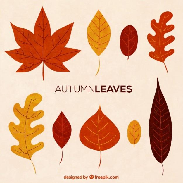 Collezione autunno foglia Vettore Premium