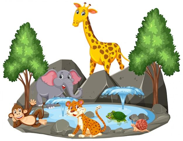 Scena di sfondo di animali selvatici dallo stagno Vettore Premium