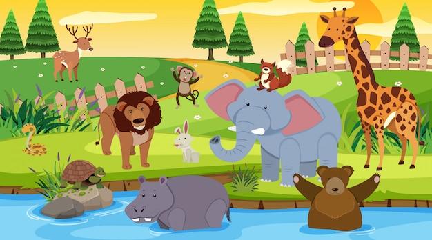 Scena di sfondo con molti animali selvatici nel parco Vettore Premium