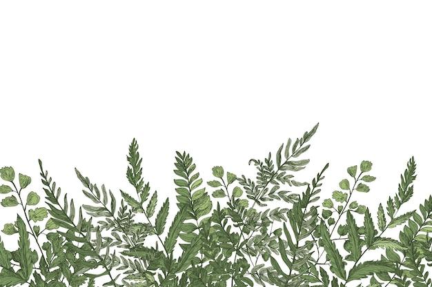 Sfondo con bellissime felci, erbe selvatiche o piante erbacee verdi che crescono sul bordo inferiore Vettore Premium