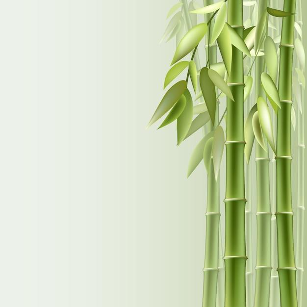 Sfondo di bambù Vettore Premium