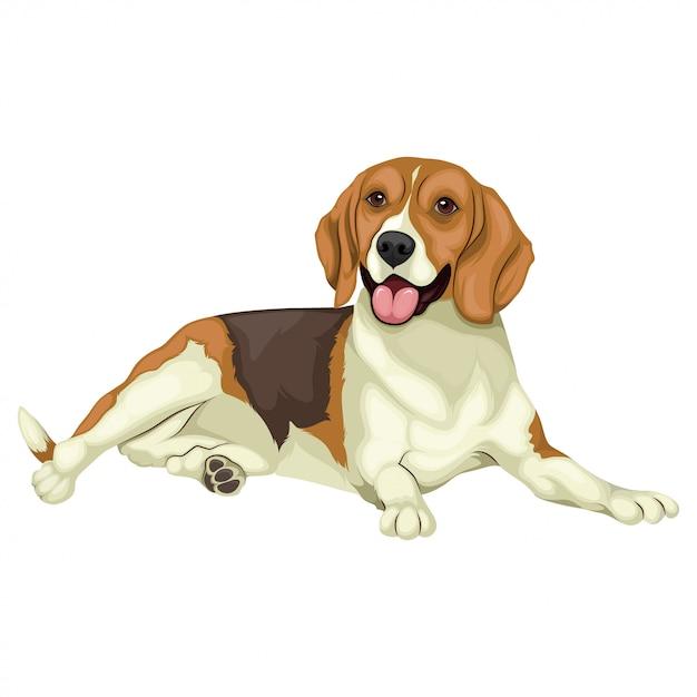 Illustrazione di beagle Vettore Premium