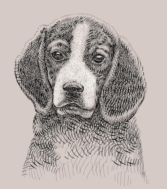 Disegno della mano del cane di animale domestico di beagle Vettore Premium