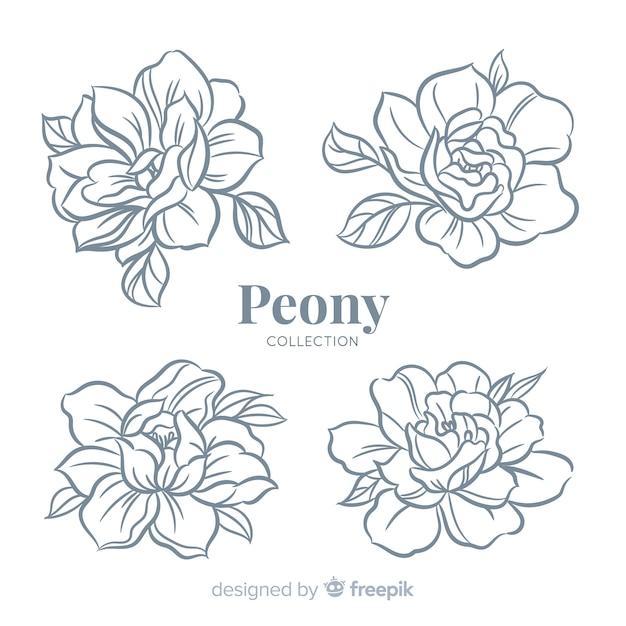 Bella collezione di fiori di peonia in mano disegnato stile Vettore Premium
