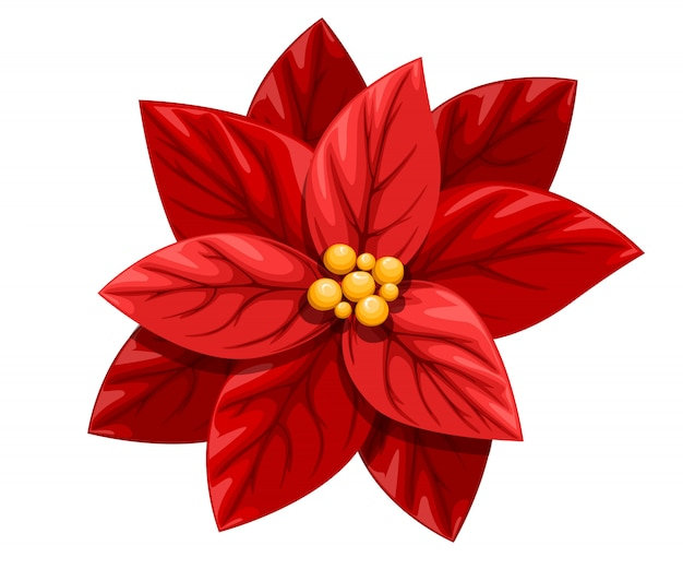 Bella poinsettia rosso fiore decorazione di natale ornamento di natale illustrazione su sfondo bianco Vettore Premium