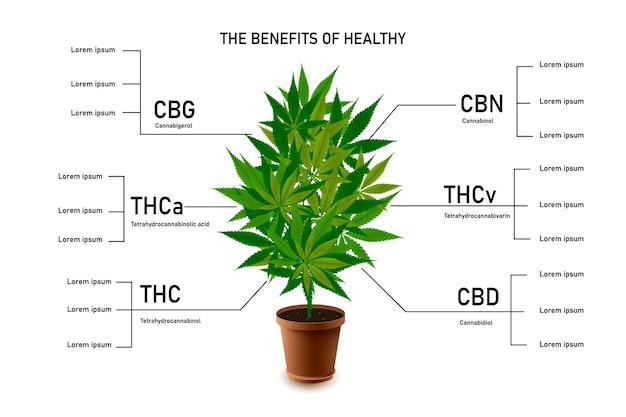 I benefici della marijuana sana lasciano un'infografica sul cannabinoide 101 Vettore Premium