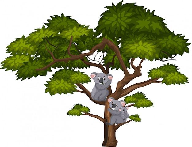 Grande albero e koala carino Vettore Premium
