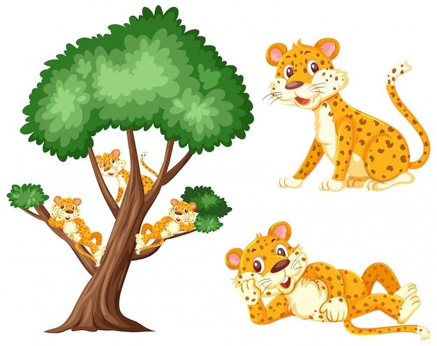 Grande albero con le tigri sui rami su bianco Vettore Premium