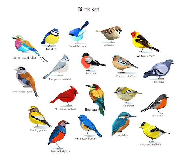 Gli uccelli hanno messo l'illustrazione Vettore Premium