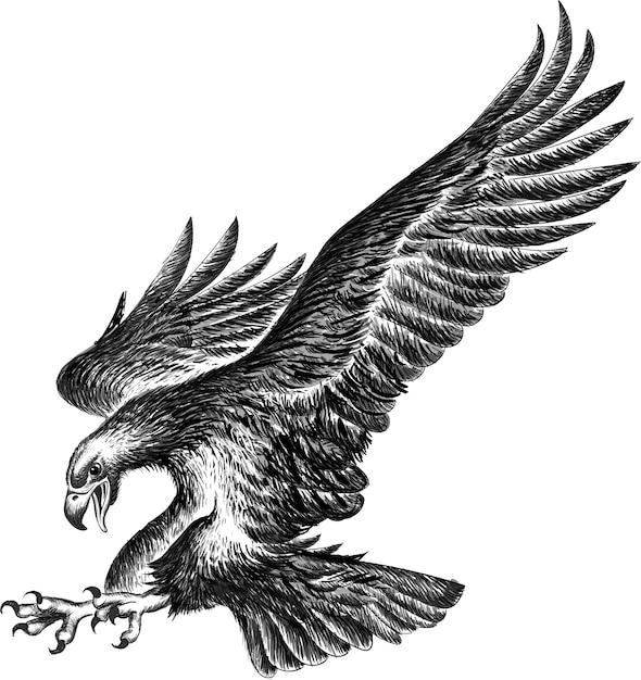 Aquila in bianco e nero Vettore Premium